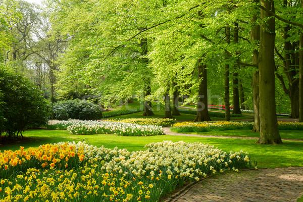 草 芝生 水仙 春 庭園 緑の草 ストックフォト © neirfy