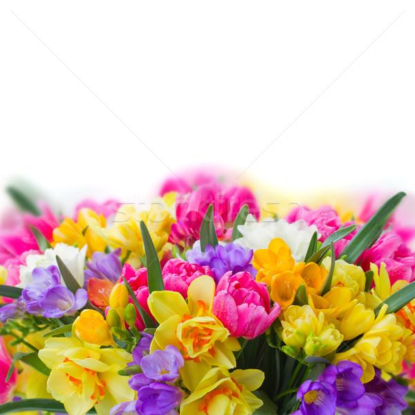 Abrótea flores fronteira fresco isolado Foto stock © neirfy