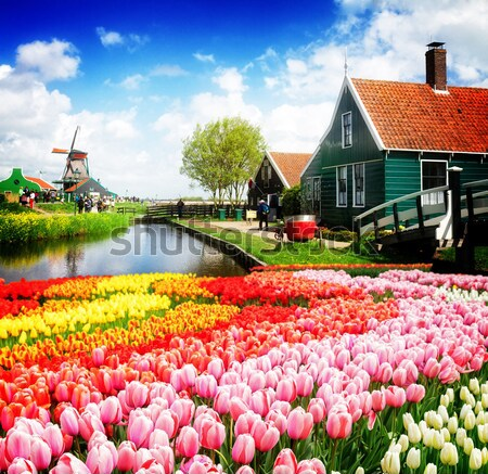 old houses of Zaanse Schans, Netherlands Stock photo © neirfy