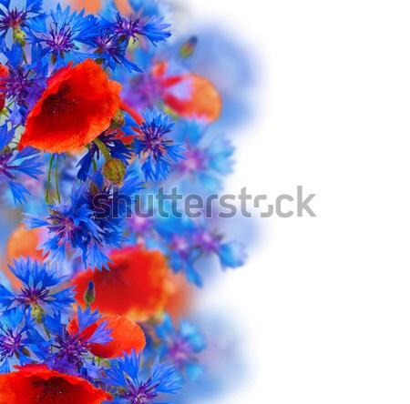 poppy and cornflower bouquet Stock photo © neirfy