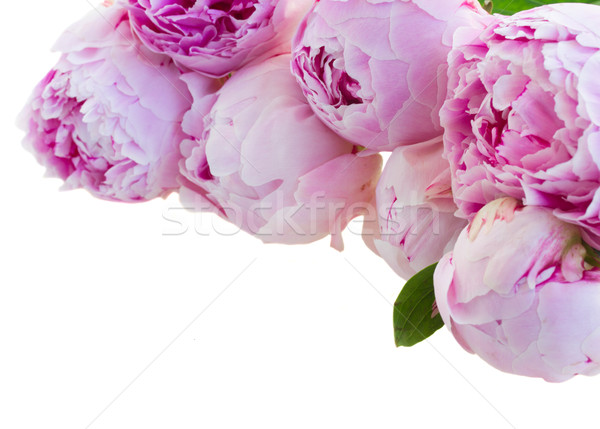 border of pink peonies Stock photo © neirfy