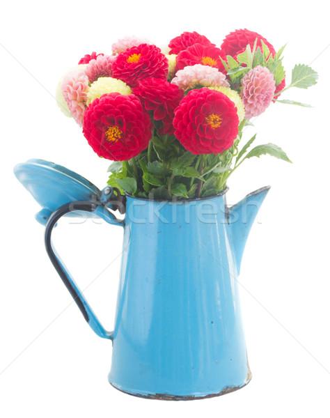 георгин цветы синий банка изолированный Сток-фото © neirfy