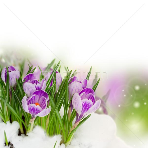 Foto stock: Primavera · azul · flores · nieve · frontera