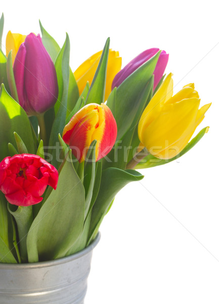 Stock photo: bouquet of  yellow, purple and red  tulips