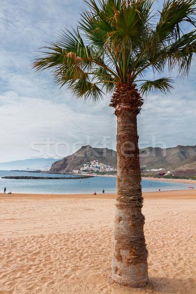 Strand tenerife Spanje palm zomer Stockfoto © neirfy
