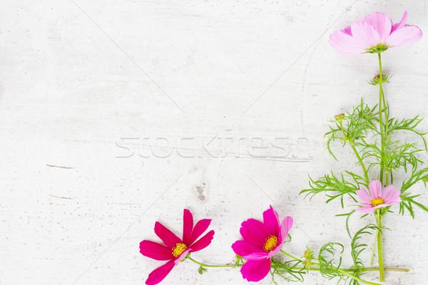 Cosmos flowers frame Stock photo © neirfy