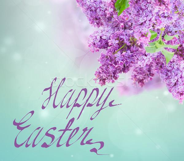 茂み ライラック 紫色 花 青空 ぼけ味 ストックフォト © neirfy