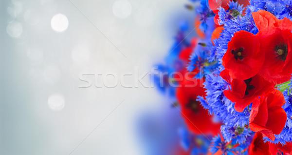 мак василек лет области цветы серый Сток-фото © neirfy