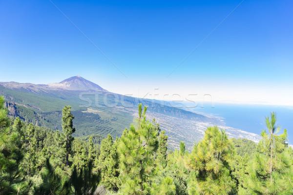 Tenerife eiland pine bos park Spanje Stockfoto © neirfy
