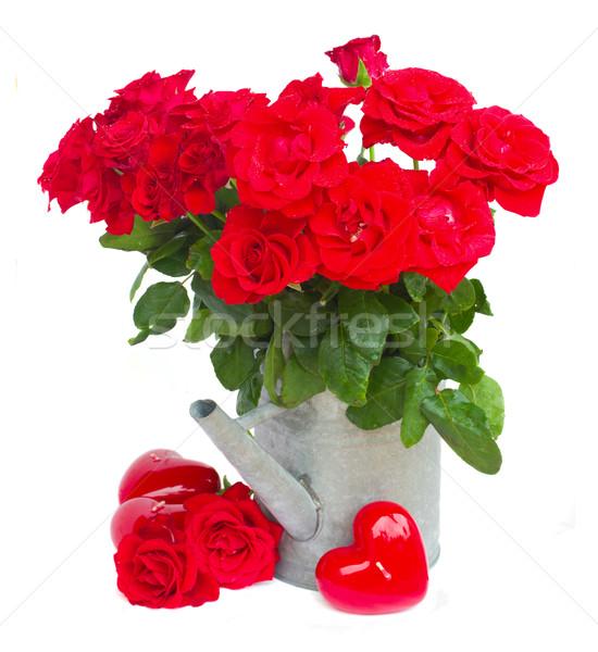 赤いバラ じょうろ 心 孤立した 白 結婚式 ストックフォト © neirfy