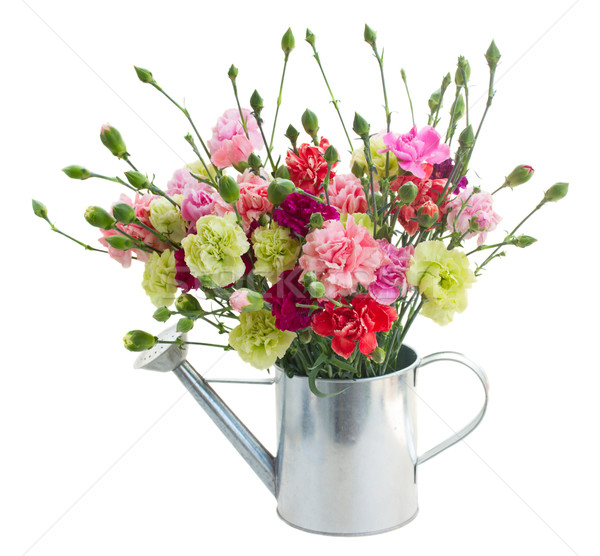 Stock photo: bunch of carnation flowers