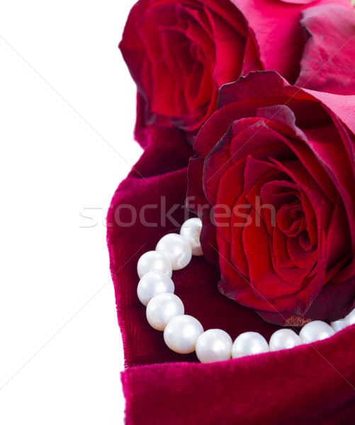 Rode rozen fluwelen vers sluiten grens geïsoleerd Stockfoto © neirfy