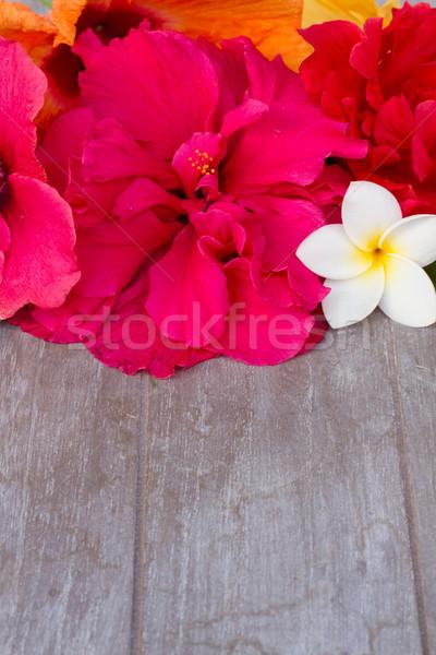границе красочный гибискуса цветы копия пространства Сток-фото © neirfy