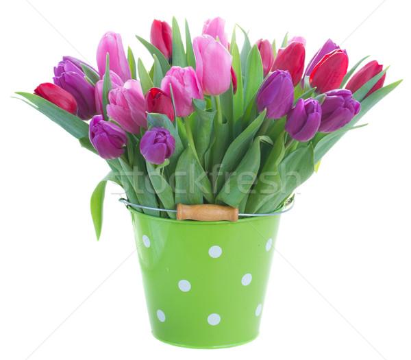 花束 赤 紫色 チューリップ 花 ストックフォト © neirfy