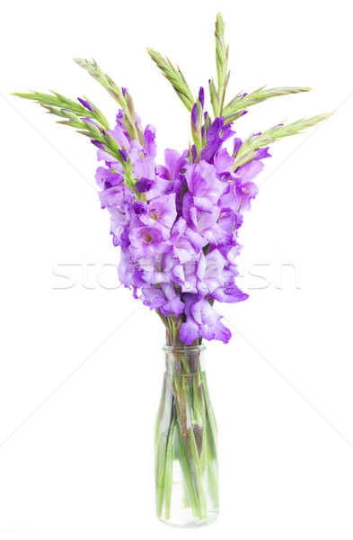 bouquet of gladiolus flowers Stock photo © neirfy