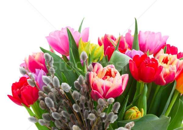 Stock photo: bouquet of  pink, purple and red  tulips