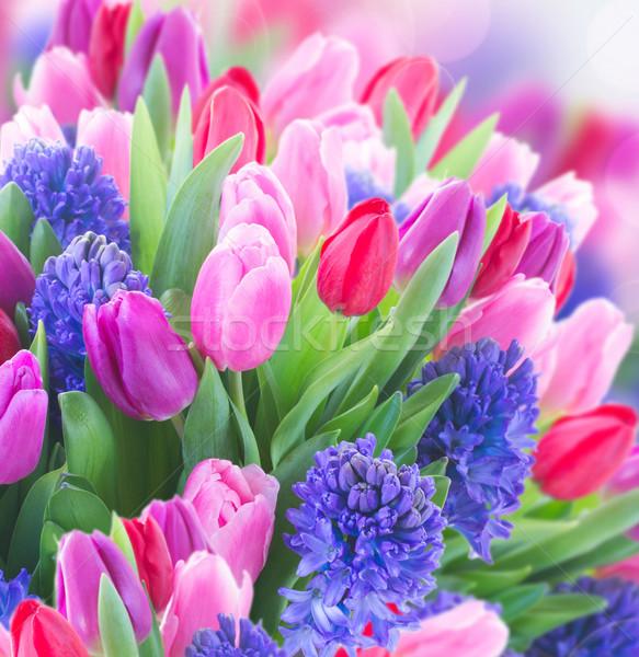 Bouquet blu giacinto tulipani Foto d'archivio © neirfy