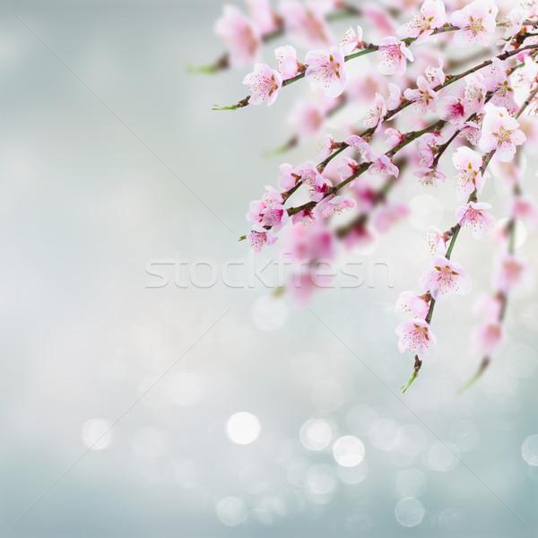 Cherry tree twig  Stock photo © neirfy