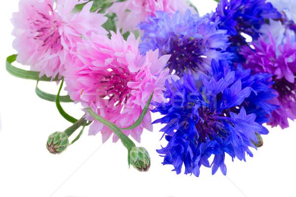 белый куча синий розовый фиолетовый изолированный Сток-фото © neirfy