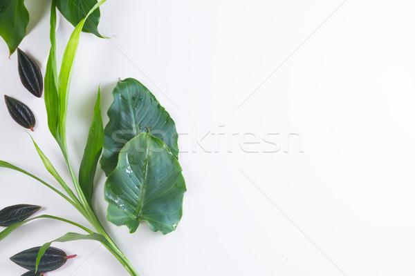 新鮮な 緑の葉 緑 エキゾチック 熱帯 ストックフォト © neirfy