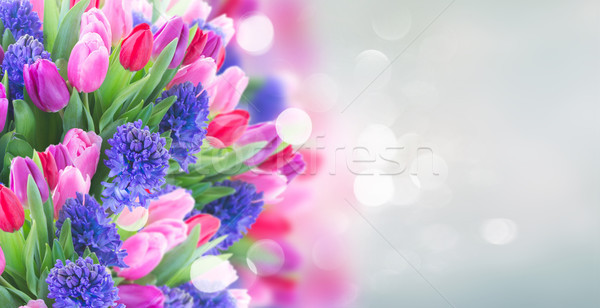 Virágcsokor kék jácint tulipánok köteg szalag Stock fotó © neirfy