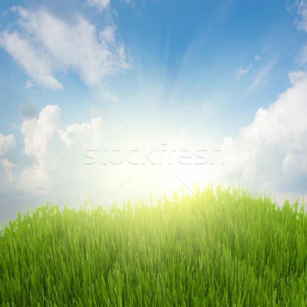 rising sun and green grass under blue sky Stock photo © neirfy