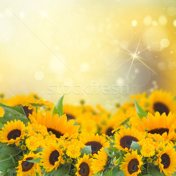 sunflowers anc marigold flowers garden Stock photo © neirfy