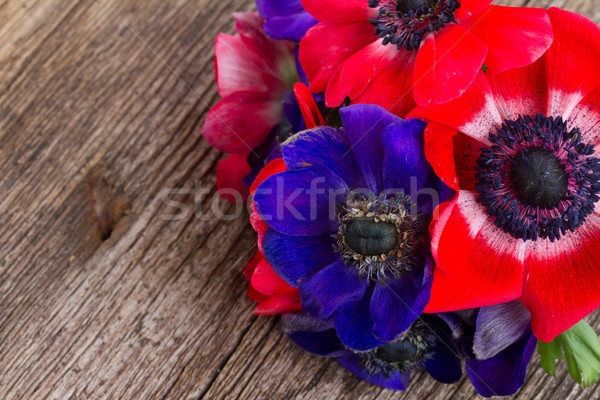 blue and red anemone flowers  Stock photo © neirfy