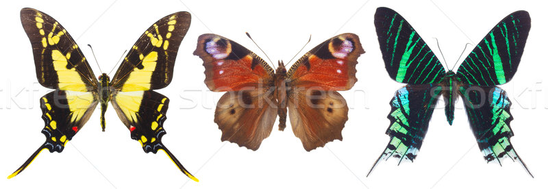 Stock photo: Tropical butterflies set