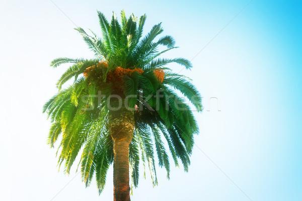 Palmboom palmbomen blauwe hemel retro zon natuur Stockfoto © neirfy