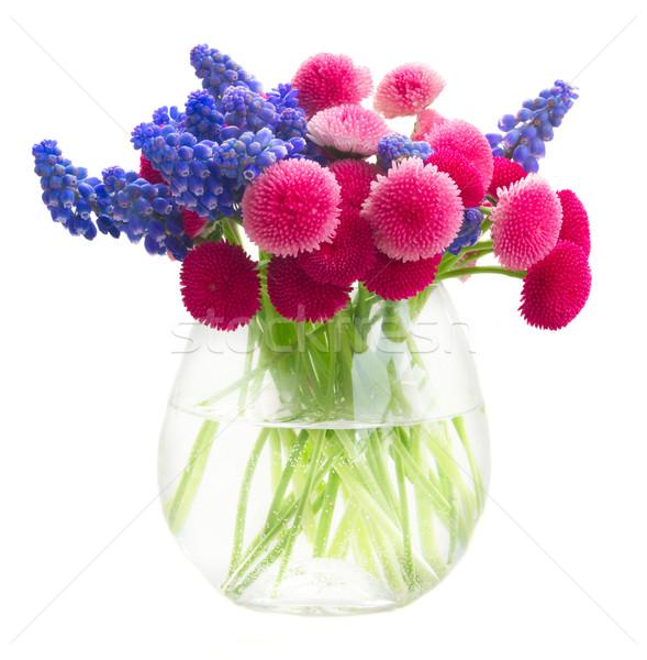 Margarida flores vidro vaso isolado branco Foto stock © neirfy