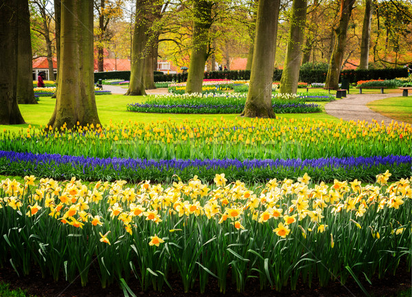Foto stock: Formal · primavera · jardim · colorido · narcisos · tulipas