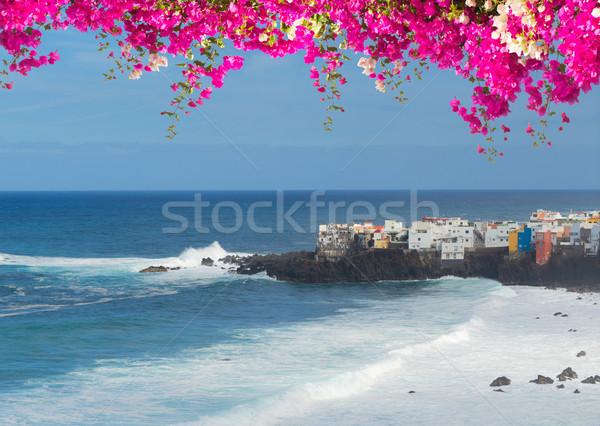 ラ テネリフェ島 島 スペイン ビーチ 花 ストックフォト © neirfy