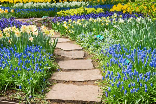 pedra jardim caminho:Foto stock: Pedra · caminho · jardim · flor · da · primavera