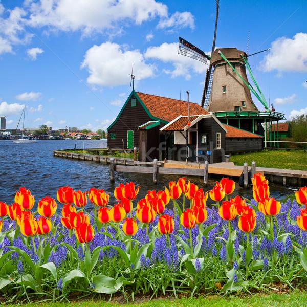 dutch windmill of Zaanse Schans Stock photo © neirfy