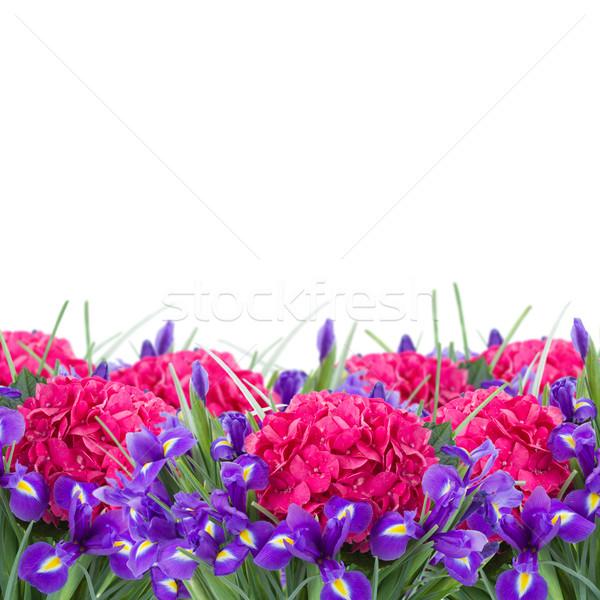 fresh hortensia and iris flowers  border Stock photo © neirfy