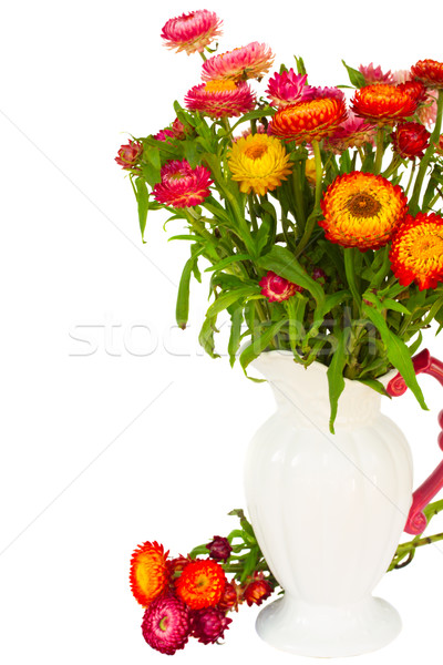 Everlasting flowers in vase Stock photo © neirfy