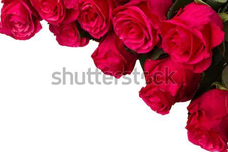 Taze pembe çiçekler yalıtılmış Stok fotoğraf © neirfy
