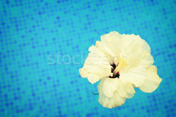 hibiscus in cool water Stock photo © neirfy