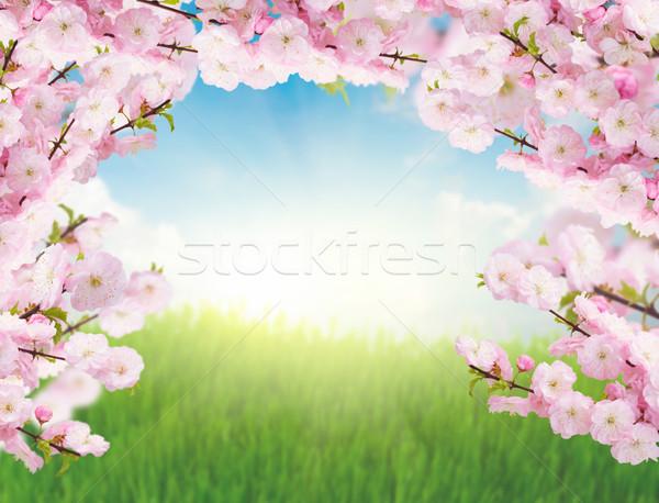 Virágzó fa zöld fű emelkedő nap kék ég Stock fotó © neirfy