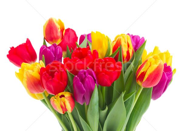 букет желтый Purple красный тюльпаны Сток-фото © neirfy
