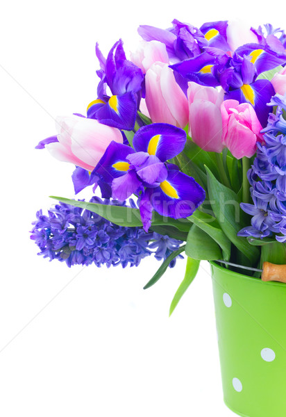Tulipas rosa azul flores verde pote Foto stock © neirfy