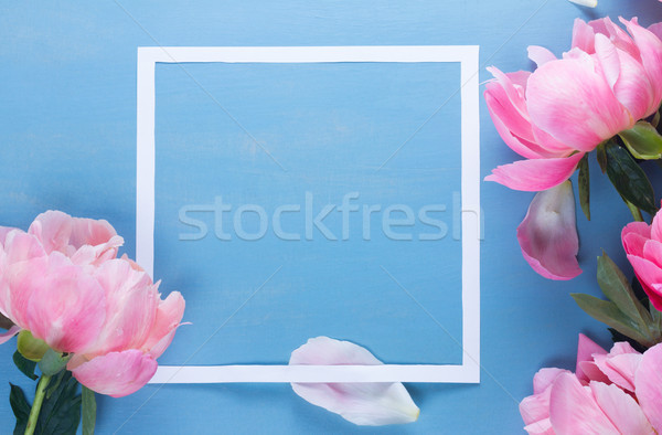 Fresh peonies on blue Stock photo © neirfy