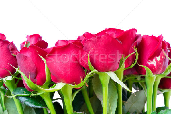 bouquet of dark red roses Stock photo © neirfy