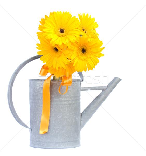 yellow gerbera flowers Stock photo © neirfy
