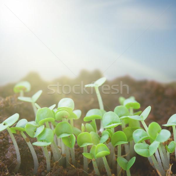 Voorjaar nieuwe begin zwarte bodem zon Stockfoto © neirfy