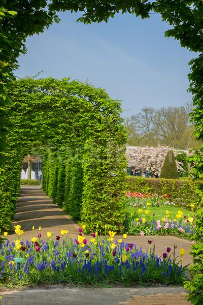 spring in Keukenhof garden, Netherlands Stock photo © neirfy
