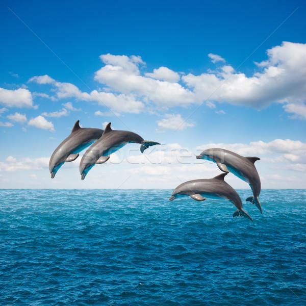 Opakowanie skoki delfiny pejzaż morski głęboko ocean Zdjęcia stock © neirfy