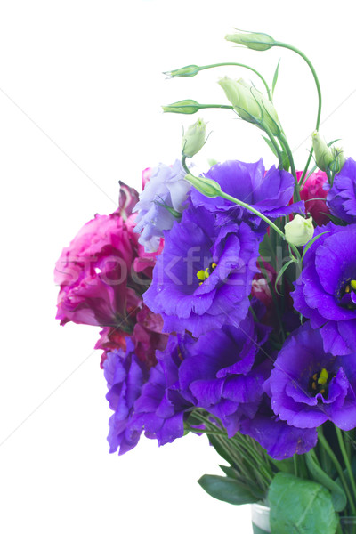 bouquet  of  violet and mauve eustoma flowers Stock photo © neirfy