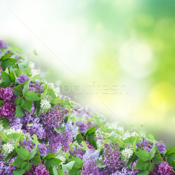 Буш сирень цветы границе зеленый bokeh Сток-фото © neirfy